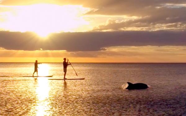 Dolphins | La Playa Resort